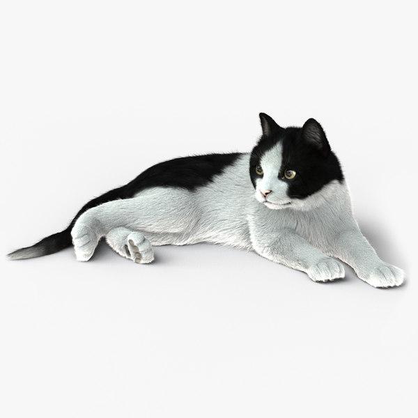 cat rigged fur 2 3D model