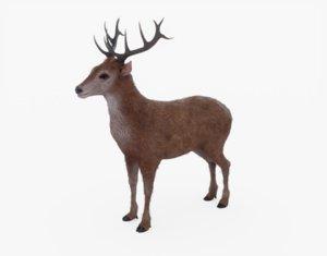 3D deer rein reindeer