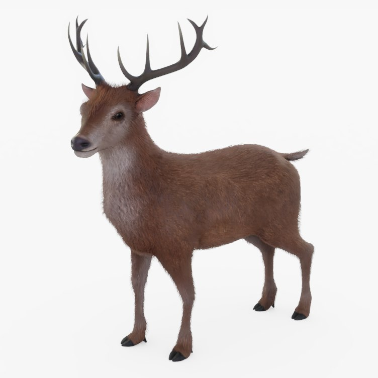 3D model rigged reindeer