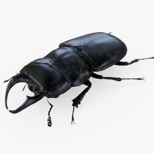 beetle stag 3D model