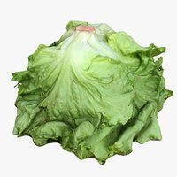 salad head 3D model