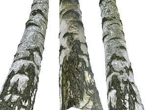 3D birch-tree bark 16k ultra model