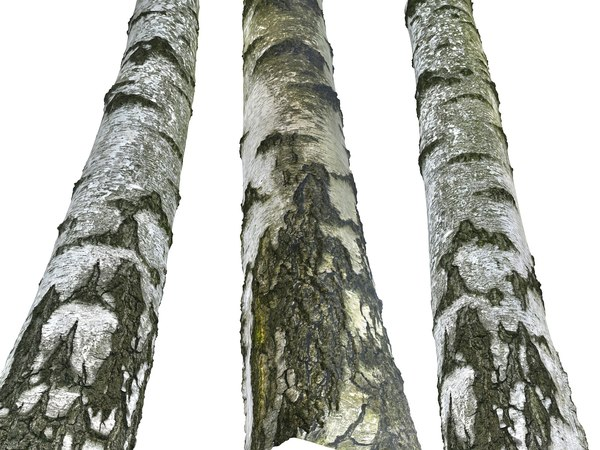 3D birch-tree bark 16k ultra model
