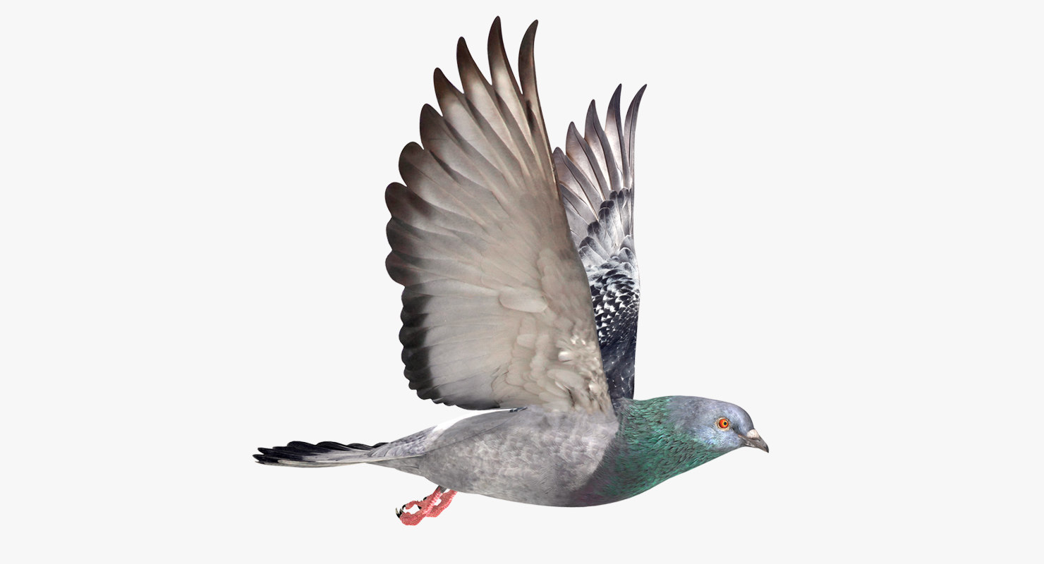 3D model city pigeon flying animation