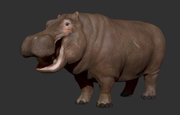 3D hippo hippopotam hippopotamus model