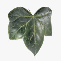 3D model ivy leaf