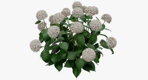 3D model plant flowers