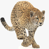 Cheetah Animated, Fur