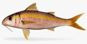 3D mexican-goatfish mulloidichthys dentatus