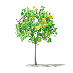 grapefruit tree fruits 1 3D model