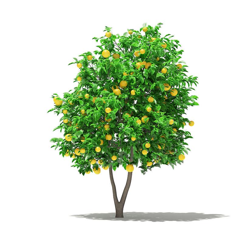 3D grapefruit tree fruits 2