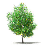 3D grapefruit tree fruits 5