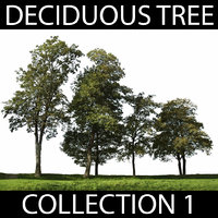 Deciduous Tree Collection