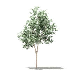 3D model olive tree 1 8m