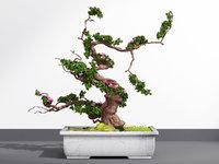bonsai plant model