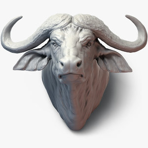 cape buffalo animal head 3D model