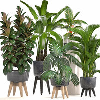 3D model ornamental plants pots