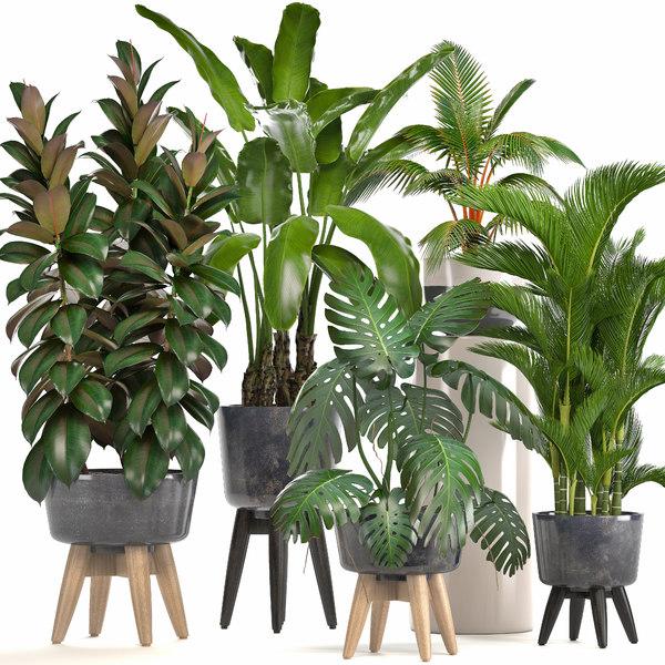 3D model ornamental plants pots