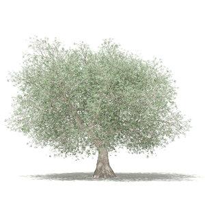 3D olive tree 4 6m