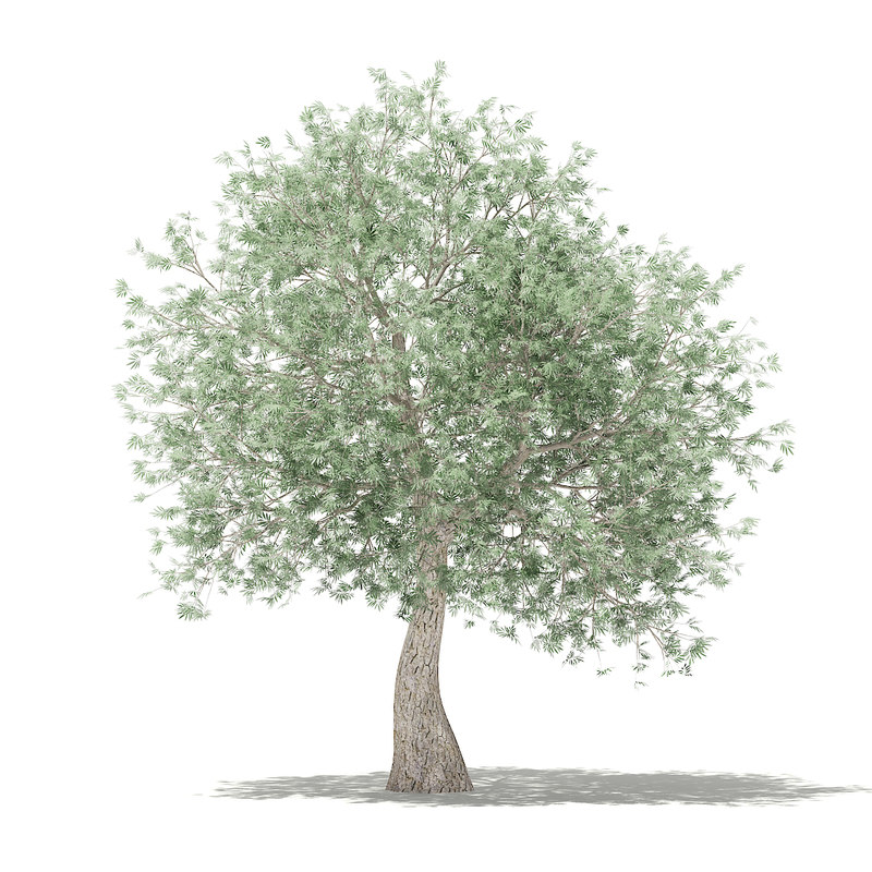 3D olive tree 3 9m model