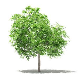 3D mango tree 2 6m
