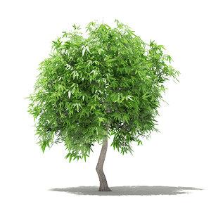 mango tree 2 7m model