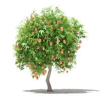 Mango Tree with Fruits 3D Model 2.7m