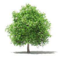 3D mango tree 4m