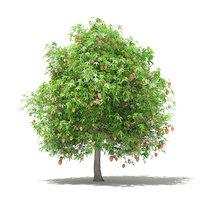 3D mango tree fruits 4m
