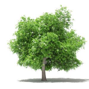 3D mango tree 4 8m