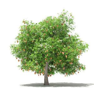 mango tree fruits 4 model