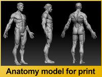printing anatomy 3D model