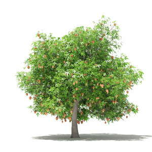 mango tree fruits 4 3D model