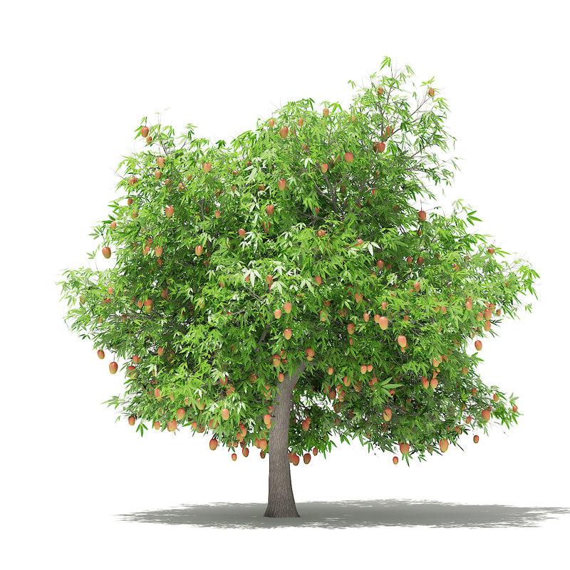 mango tree fruits 4 3D model