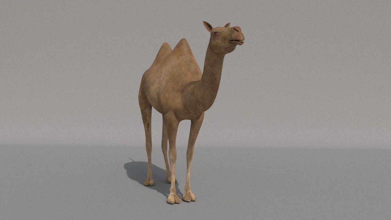 camel vr games 3D model