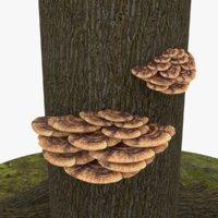 3D bracket fungus