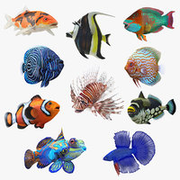 3D model coral fishes 3