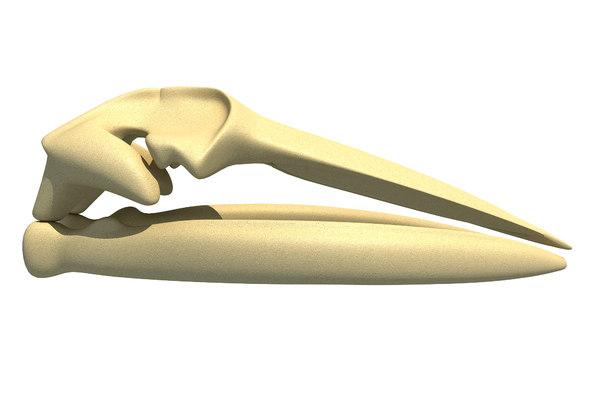3D model fin whale skull skeleton