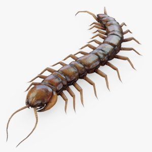 centipede insect bug 3D model