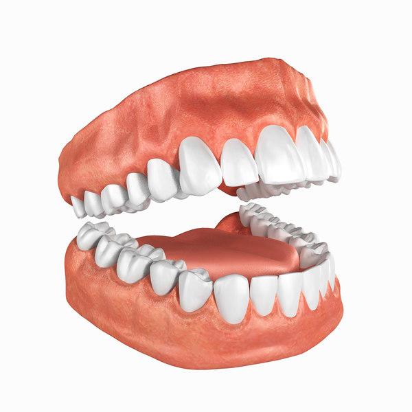 human teeth anatomy 3D