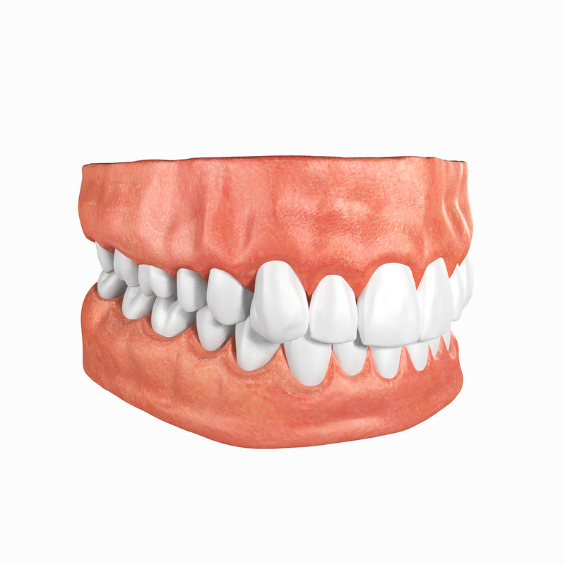 Human Teeth Anatomy 3d Turbosquid 1306628