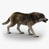 wolf rigged fur 3 model