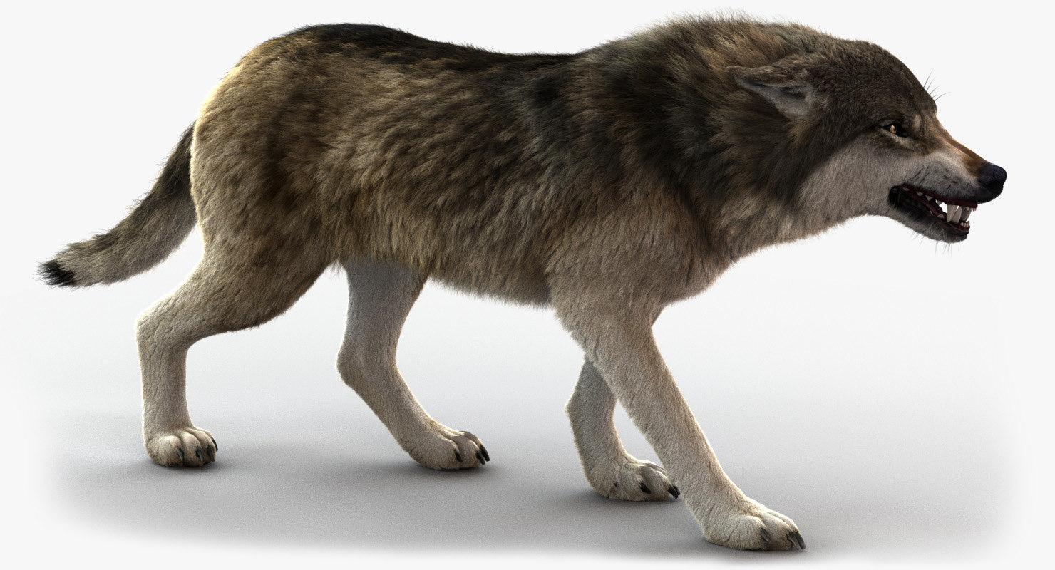 wolf rigged fur 3 model