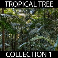 Tropical Tree Collection