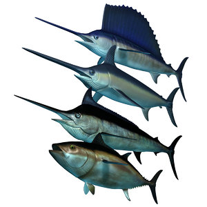3D model big marlin tuna