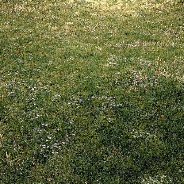 grass assets meadows model