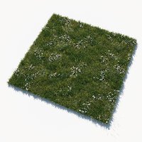 Grass Asset 01 _ Meadow