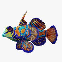 mandarinfish fish 3D model