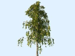 3D tree scanned ready
