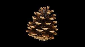 3D pine cone model